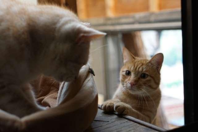 二匹の猫が見つめ合う写真